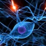脳の可塑性(かそせい)による可能性 大人の脳だって成長・発達します。