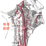頚椎原性めまい 〜首の問題が原因で起こるめまい〜